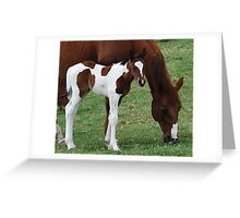 Foal and Mare Greeting Card