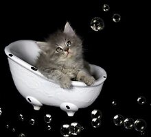 Dusty in the Tub by Kimberly Palmer