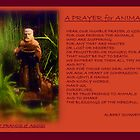 '' A PRAYER FOR ANIMALS ''  by Albert Schweitzer by artist4peace