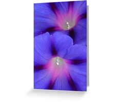 Purple and Pink Colored Morning Glory Flowers Closeup Greeting Card