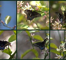 Butterfly Calendar  2010 by Virginia N. Fred