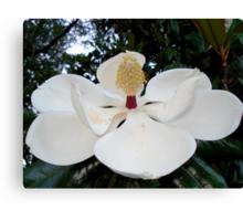 Magnolia Angel Canvas Print