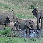 Elephant Mud Bath, Tarangire National Park, Tanzania, Africa (Y) by Adrian Paul