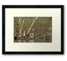 Geese in the marsh Framed Print