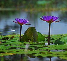 Blue Lotus by Chamika Amarasiri