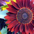 Market - Dark Sunflower by rabeeker
