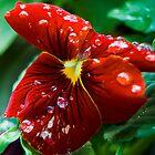 Spring Flower VII by carlina999