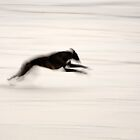 Fast Dog by Bill Crookston