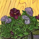 Pansy Flowers by bernzweig