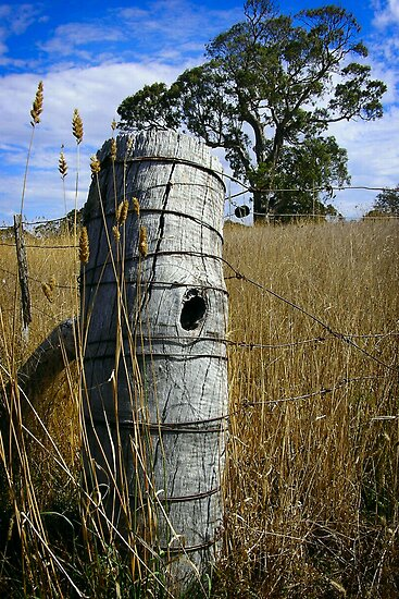 Fenced - rural image by Paul Moloney