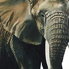 """Elephant"" Wildlife Animal Watercolor by Paul Jackson"
