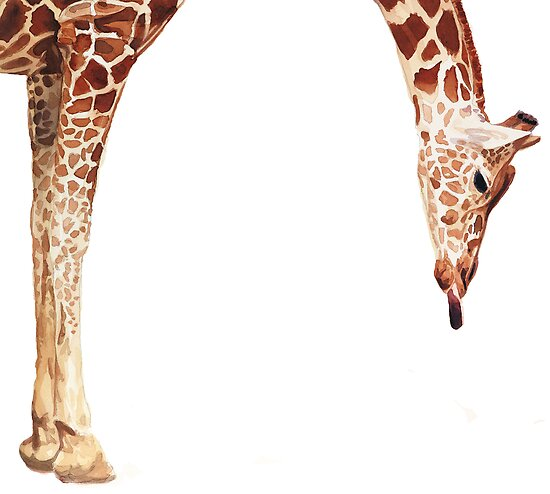 """Licker"" Giraffe Wildlife Animal Watercolor by Paul Jackson"