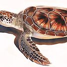 Sea Turtle Wildlife Watercolor Art  by Paul Jackson