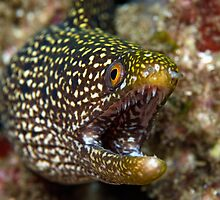 Moray  by Stephen Colquitt