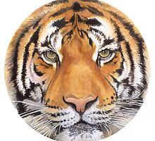 """Tiger Spot"" Wildlife Watercolor by Paul Jackson"