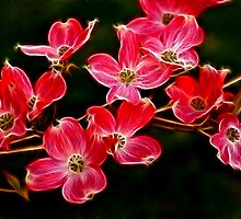 Dogwood Blossoms by Sandy Keeton