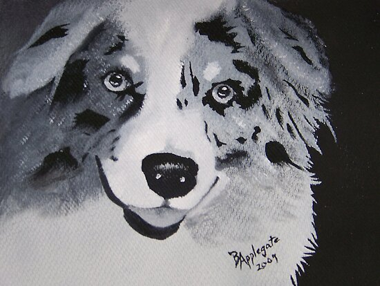 Aussie White on Black ~ Australian Shepherd ~ Oil Painting by Barbara Applegate