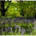 Bluebells II by Alan McMorris