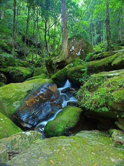 Jurassic Park - Katoomba Creek, NSW by Malcolm Katon