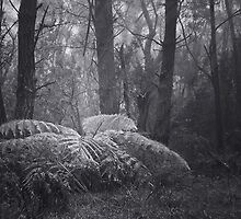 Primeval Forest ~ B&W by Rosalie Dale
