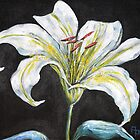 White Lily by Pamela Plante