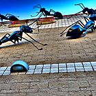 Ants by photosbyflood