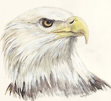 Bald Eagle by morgansartworld