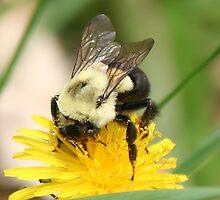 Pollen Grabber by Raider6569