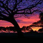 Magic Tree 2 by Lesley Ortiz