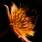 Firelight by Jenni77