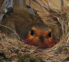 Six warm eggs by George Parapadakis (monocotylidono)