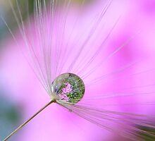 Dandelion bubble by Yool