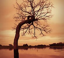 Bolivian Amazon by louise