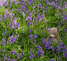 Bear in the Bluebells by Mark Thompson