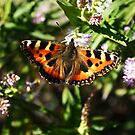 Sun kissed butterfly by Finbarr Reilly