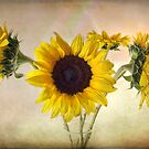 Old Fashioned Sunflowers by LouiseK