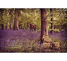 Vintage Bluebell Forest~ Photographic Print