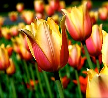 Eye Full of Tulips by Tina Longwell
