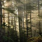 Rainforest Forensics by VickiOBrien