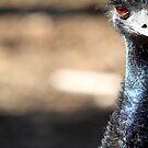 Half an Emu by James Troi