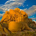 Joshua Tree Golden Light by photosbyflood