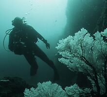 Videographer gliding past a Sea Fan  by jenitae