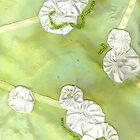 Green Silk by erinjean