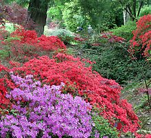 Exbury Gardens - Rhododendrons and Azaleas by Caroline Anderson