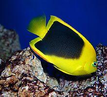 Rainbow Fish by Lucyslogic61