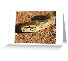 African Rock Python Greeting Card