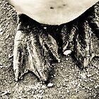 Feet by Tim Cowley