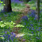 Bluebell Path by Katariina Jarvinen