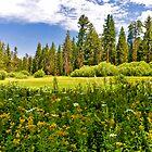 Golden Meadow by photosbyflood