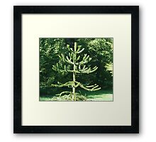 Monkey Puzzle Tree Framed Print